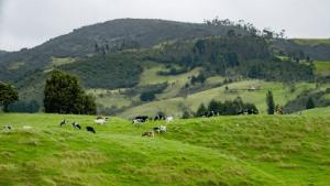 Pecuária no Cerrado: Breve histórico