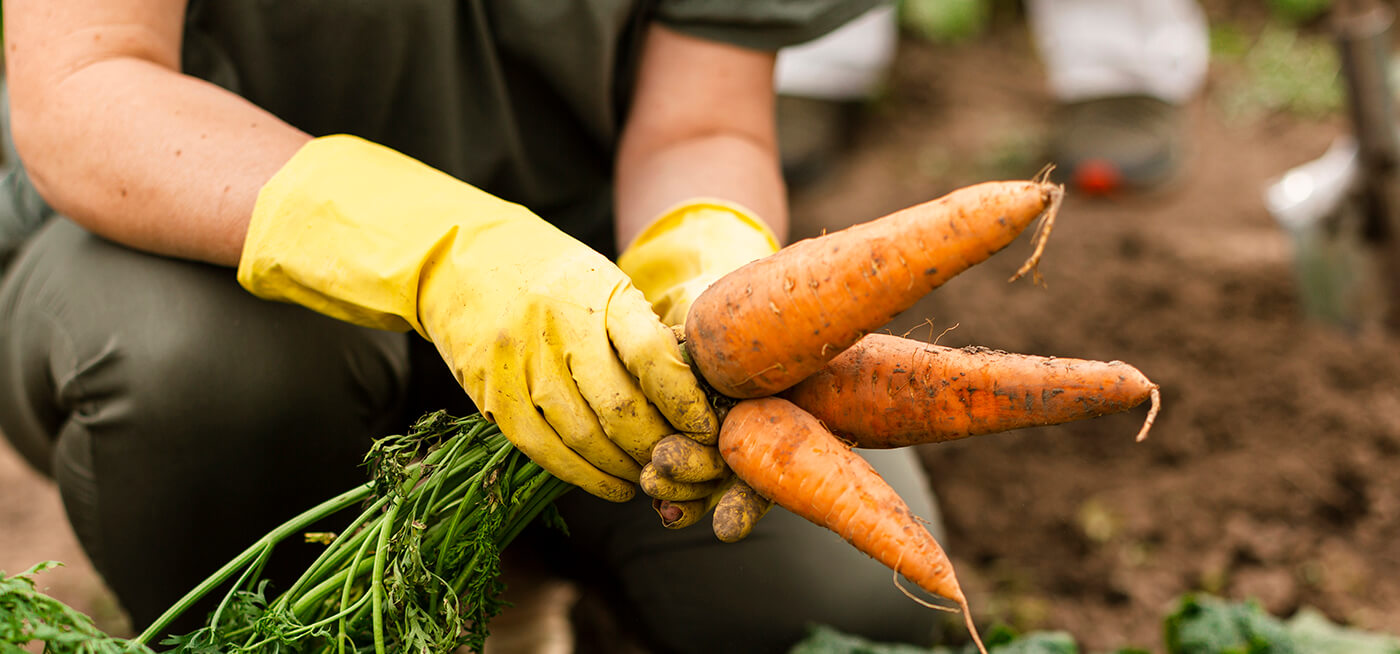 Diferenças técnicas entre convencionais e orgânicos