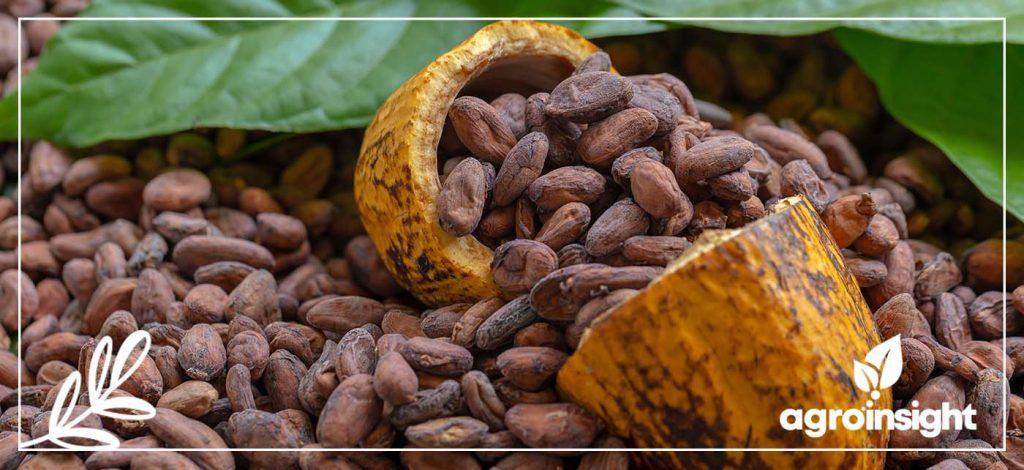Curadoria de Fruticultura – Produção de Cacau