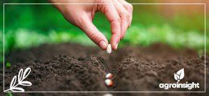 o impacto da má distribuição do plantio na produtividade das culturas da soja e milho.