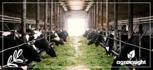Pecuária Sustentável e de Precisão