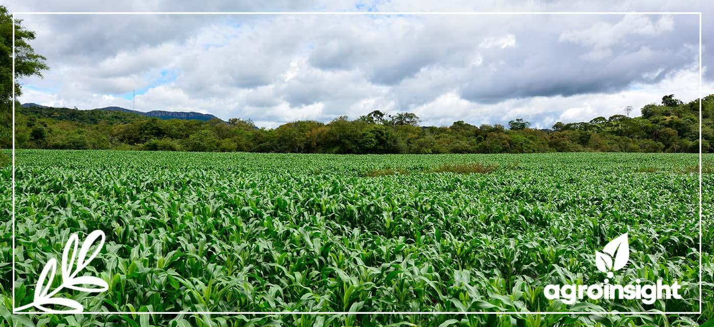 Controle biológico nas culturas da soja e do milho