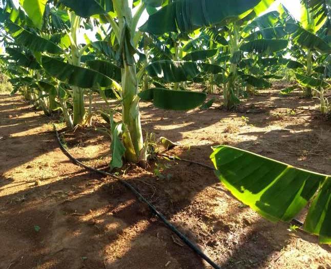 Manejo racional da irrigação: via Solo