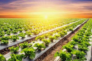 Controle biológico em hortaliças