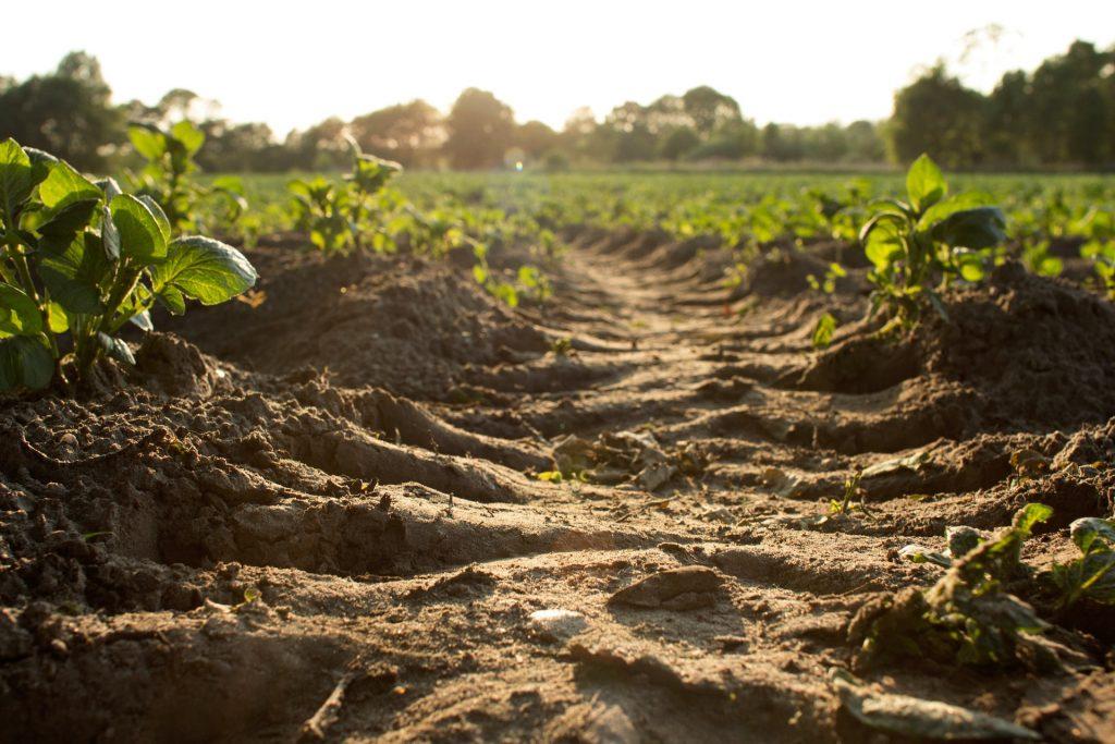 Correção da acidez do solo