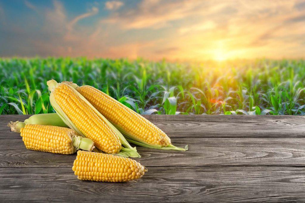 Fatores que podem alavancar o preço do milho em 2021