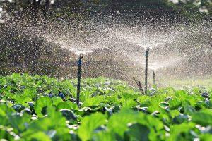 Histórico da irrigação