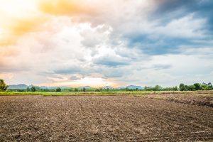 Remineralizadores de solo: um novo insumo para a agricultura brasileira