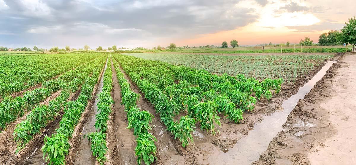 Manejo racional da irrigação: via Clima
