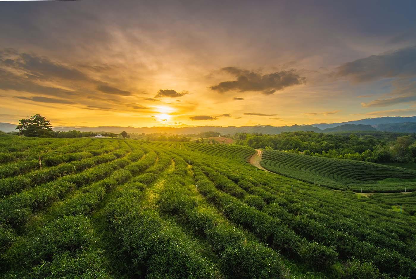 Você sabe o que é agricultura sintrópica?