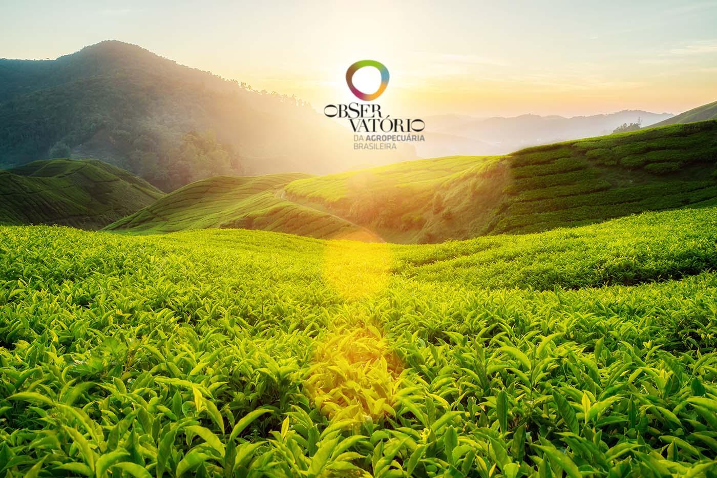 Conheça o Observatório da Agricultura Brasileira!