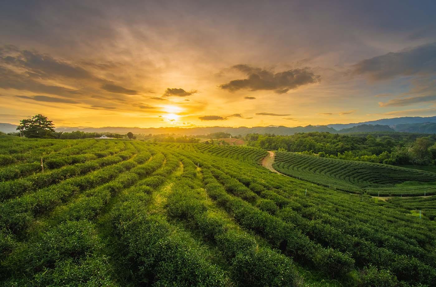 O que é agrobiodiversidade funcional?